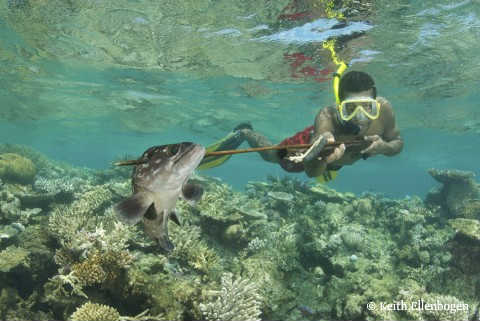 Fiji_spearfisher_with_grouper