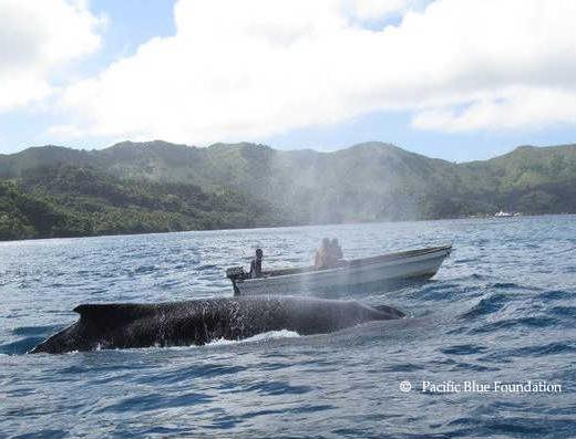 Humpbacks-are-Breathtaking1