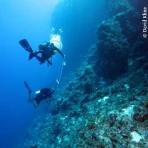 deep sea corals-300×300