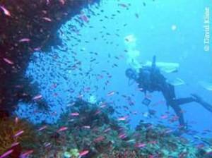 didi_diving-300×224