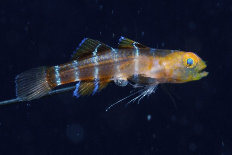 New species1